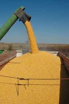Harvest, Corn, Fall, Agriculture, Ethanol, Food, Field