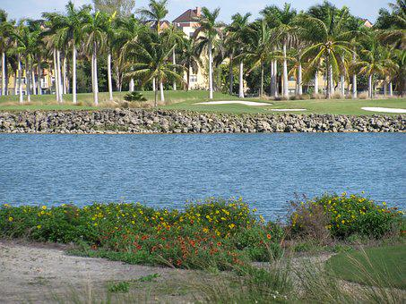 Palm Trees, Water, Golf, Lake, Fairway, Nature, Golfer