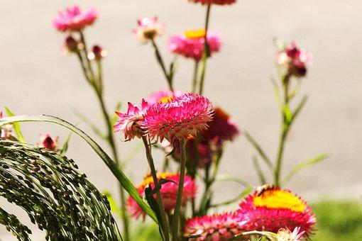 Flower Garden, Flower, Summer Flower, Garden Flower