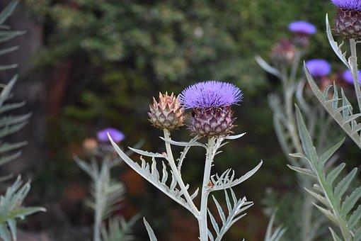 Flower, Bloom, Nature, Flora, Garden, Summer, Petal