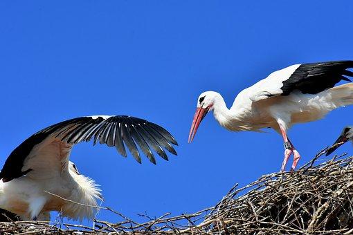 Stork, Flying, Wing, Birds, Plumage, Nature, Animals