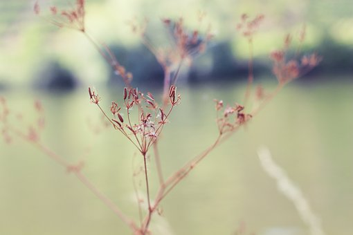 Nature, Mood, Green, Dry, Forest, Flower, Minimalist