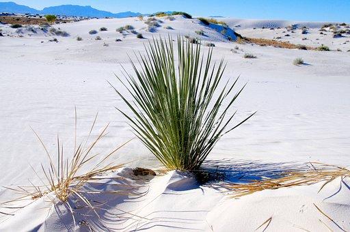 Narrowleaf Yucca, Green, Landscape, Wilderness, Scenery