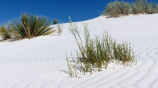 Desert, Sands, White, Gypsum, Dry, Landscape, Dunes