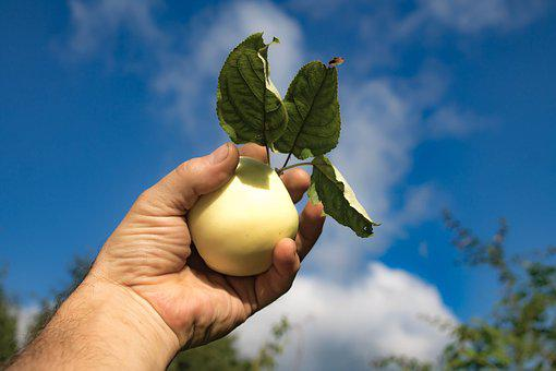 Apple, Sky, Fruit, Clouds, Hand, Summer, White Filling