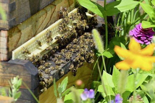 Bees, Beehive, Bee, Honey, Honey Bee, Beekeeping