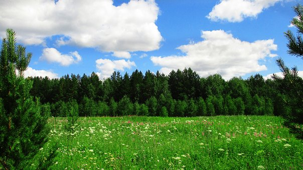 Landscape, Field, Forest, Russia, Ural, Trees