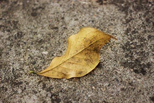 Autumn, Leaves, Red, Season, Leaf, October