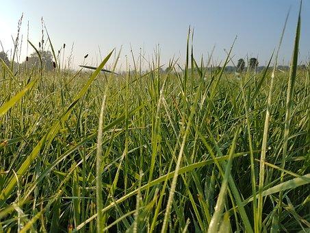 Mood, Meadow, Dew, Nature, Landscape, Green, Grass