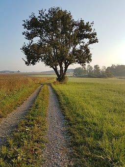 Tree, Away, Grass, Meadow, Sky, Leaves