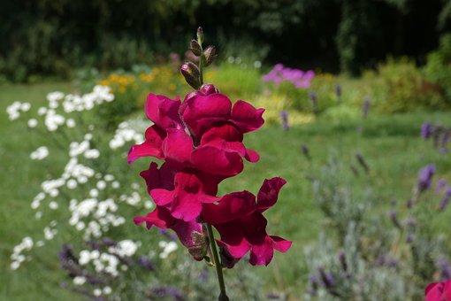 Flower, Velvet, Nature, Red, Garden, Petals, Blossom