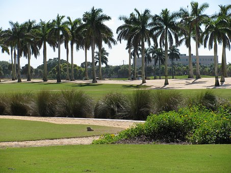 Palm Trees, Greens, Nature, Landscape, Fairway, Outdoor