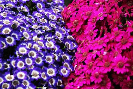 Flower, Purple, Pink, Nature, Beautiful