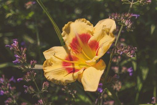 Nature, Flower, Bloom, Plant, Garden, Outdoor