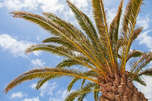 Palm Tree, Holiday, Air, Island, Palm, Landscape