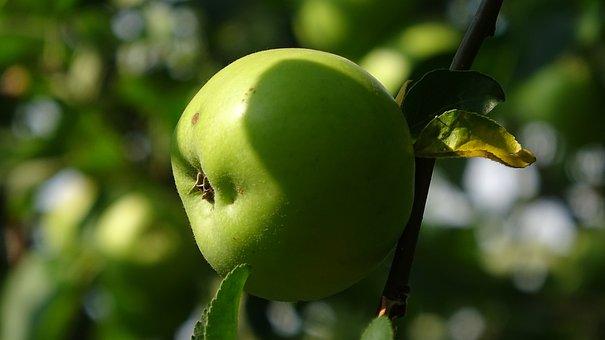 Apple, Tree, Green, Fruit, Ripe, Nature, Healthy
