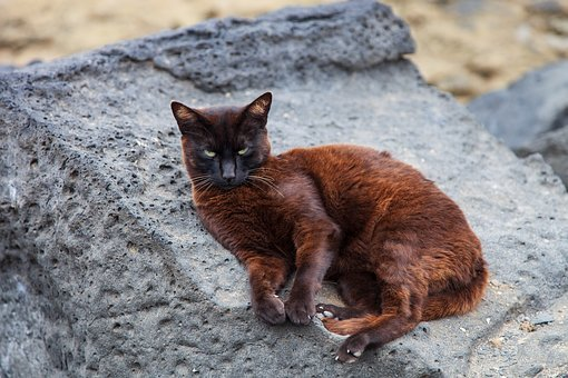 Cat, Rock, Brown, Holiday, Rest