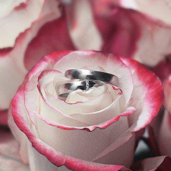 Wedding Rings, Rings, Rose, Wedding, Engaged, Married