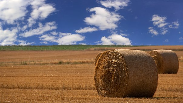 Straw Bales, Arable, Meadow, Agriculture, Langgöns, Sky