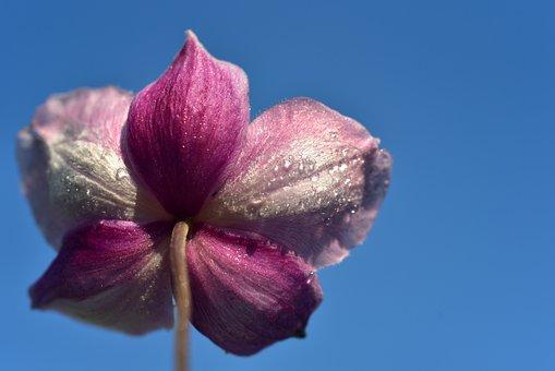 Anemone, Back, Rear, From The Rear, Sky, Skyward, Drip