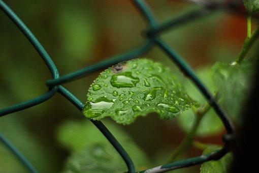 Leaf, Leaves, Plant, Spring, Nature, Green, Fruit, Food