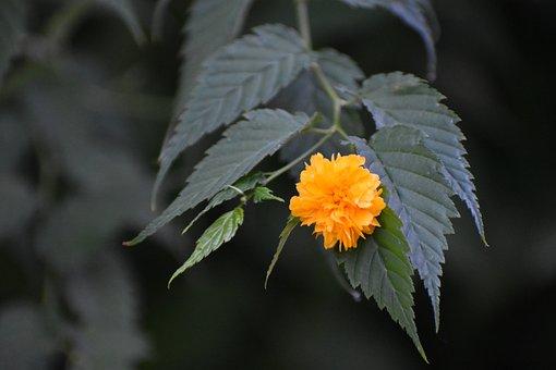 Flower, Yellow, Bloom, Nature, Flora, Garden, Summer