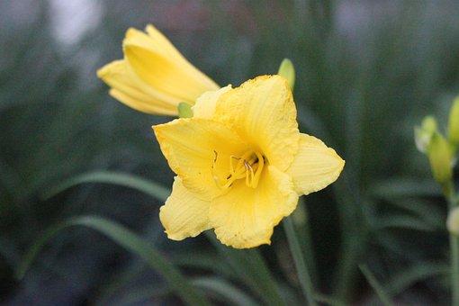 Flower, Summer Flower, Wild Flower