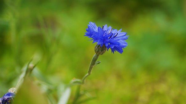 Wildflower, Flowers, Petal, Summer, Stem, Floral