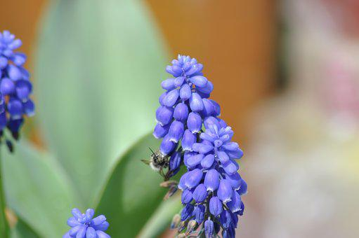Flower, Supplies, Macro, Almost, Romantic, Flowers