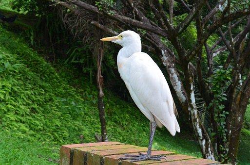 Birds, White, Wildlife, Stork