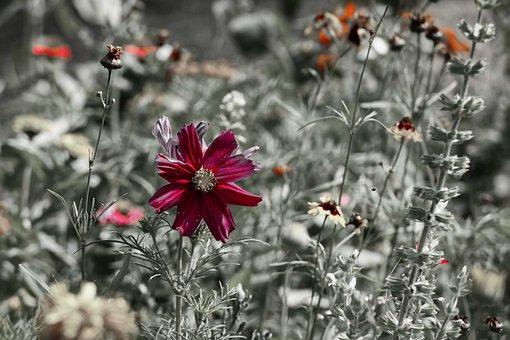 Wild Flower, Bloom, Nature, Meadow, Plant, Summer