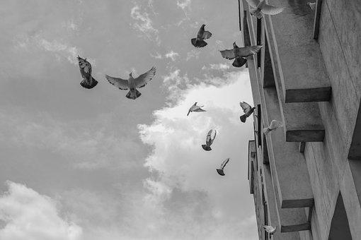 Pigeons, Sky, Flight, Nature, Freedom