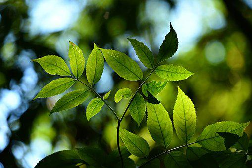 Leaves, Foliage, Twig, Back Lighting, Bokeh, Shape