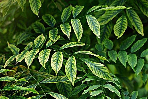 Leaves, Foliage, Twig, Bush, Plant, Veins, Pattern