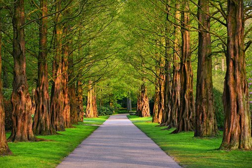 Lane, Tree, Tree Lined Lane, Park, Path, Grass