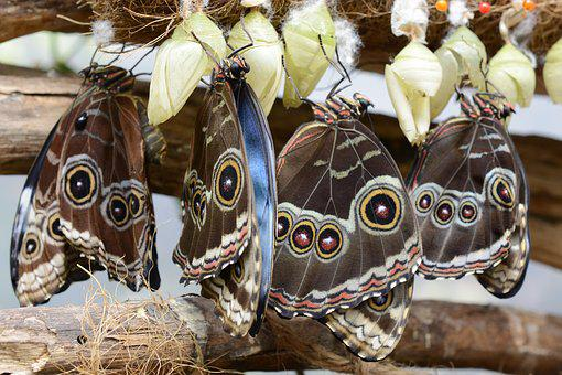 Butterfly, Insect, Wing, Animal, Black, Brown