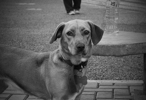 Dog, Pet, Animals, Puppy, Portrait, Black, Sad, Look