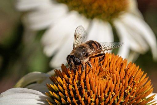 Mist Bee, Mud Bee