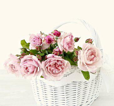 Pink, Roses, Flowers, Romantic, Wedding, Bush Röschen