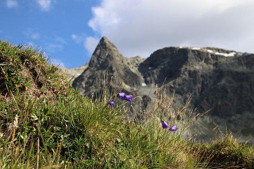 Tops, Meadow, Tour, The Alps, High, Julierpass