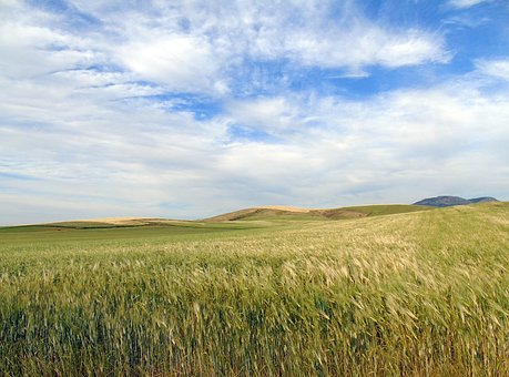 Field, Wheat, Nature, Countryside, Landscape