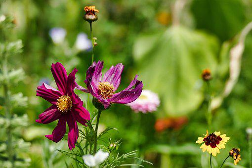 Wild Flower, Summer, Nature, Plant, Flower, Flowers