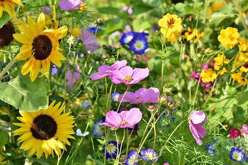 Flower Meadow, Flowers, Wildflowers, Wild Flowers