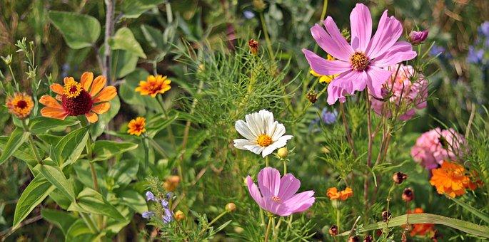 Wild Flowers, Meadow, Nature, Summer, Flowers, Bloom