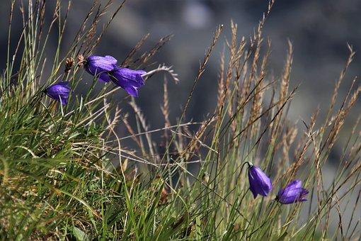 Ringtones, Alpine, Wild Flowers, Meadow, Wind, Plant