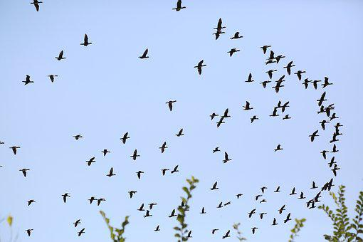 Birds, Sky, Nature, Animal, Bird, Wing, Flight