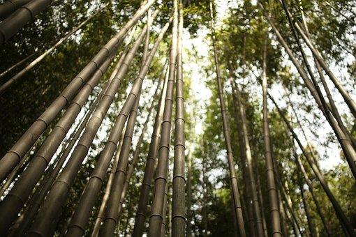 Arashiyama, Bamboo, Japan, Green, Kyoto, Japanese