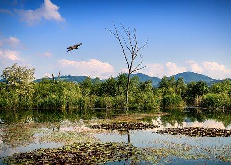 Lavant, Water, The Nature Reserve Untouched, Au
