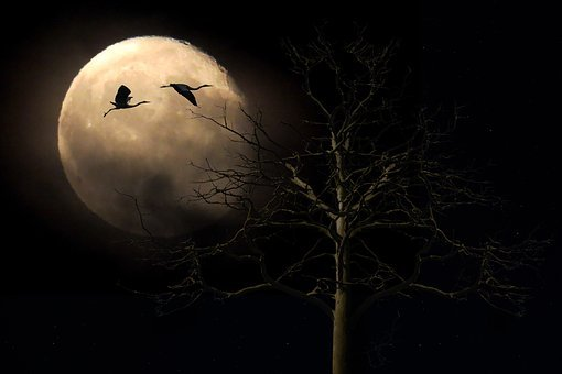 Landscape, Nature, Moon, Full Moon, Tree, Bird, Heron