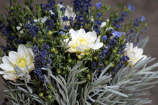 Lavender, Lein, Bouquet, Purple, Blue, Herbs